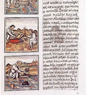 Флорентийский кодекс | Мифология Ацтеков